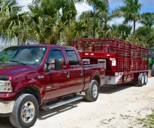 Nutztiere stressfrei transportieren